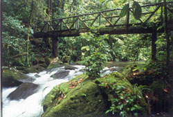 Rainforest Honeymoon